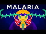 Genetic Engineering and Diseases Gene Drive &amp Malaria