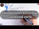 Синовиальные влагалища сухожилий кисти - meduniver.com