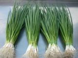 Супер способ выращивания лука в пакете без земли!