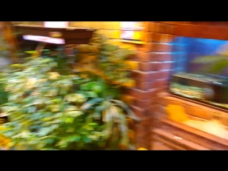 Тропический комплекс Миндо 30.09.2016.
