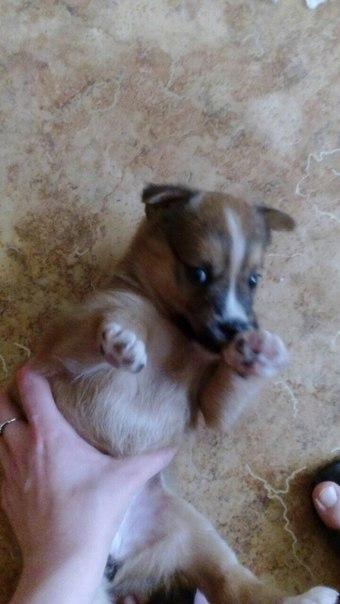 Отдам щеночка дворняжки в добрые руки. Девочке около месяца, нашли её