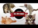 🐾 Как дрессировать кошку как правильно кошку воспитывать и перевоспитывать 🐾