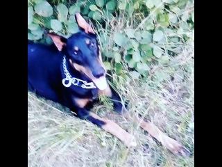 luda_guceva video
