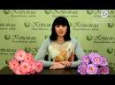 Коллекция цветов и букетов в магазине Kvitu! № 284 Букет гвоздики плоской, 52 см.