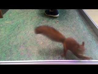 The Prodigy Squirrel