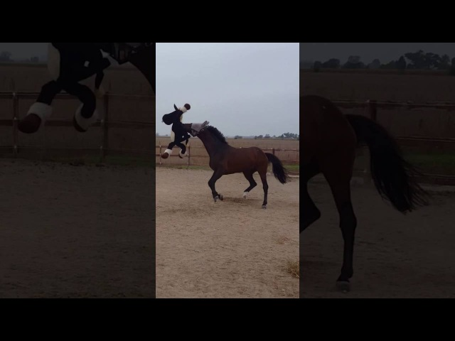 Horseplay with Seymour and Vuvu
