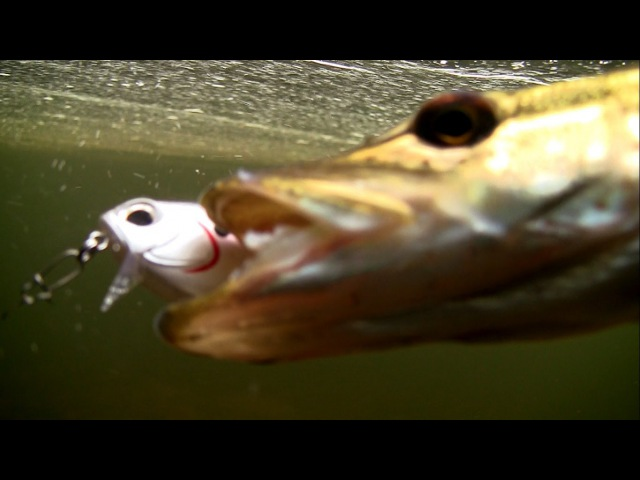 Fishing: my best / top 10 DUO lures for bass pike muskie perch zander seabass in action underwater.