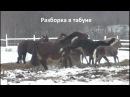 Клип про лошадей,  Дети поиграли - мамки подрались...