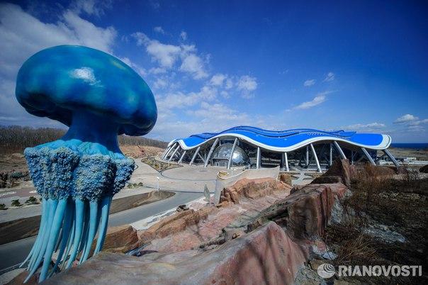 В интернете появилась петиция с требованием закрыть Приморский океанариум, где погибли два дельфина и сивуч: https://ria.ru/society/20161027/1480089253.html