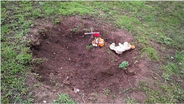 Житель Альметьевска пожаловался в «Народный контроль» на захоронение животных в зоне отдыха каскада прудов