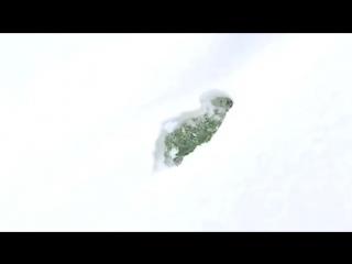 Почему чихуахуа не бегают по снегу