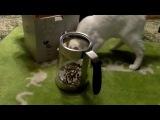 Умный кот выбирает KITFORT! Чайник КТ-601 лучшая игрушка-кормушка!!!)))