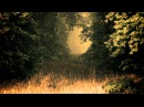 Впусти меня - Осеннее Tribal Cafe 2012 трейлер 1
