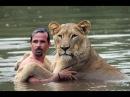Невероятная дружба человека и львов Львиный смотритель Очень трогательно