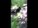 Прогулка с собакиным