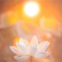 Женская йога и йога для начинающих (Мск)
