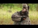 О чем говорят животные - Волк Серия 6