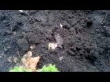 Чернозем,полезное и позновательное видео о черноземе .