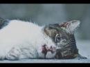 Топ 5 самых трогательных видео на YouTube. Которые заставят вас заплакать. До слез 2 Часть