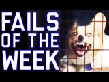 Fails of the Week 2 August 2016