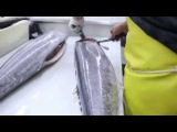 Fish Filleting- Ono (Wahoo)