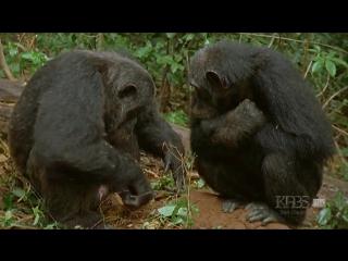 В сердце джунглей: Зверь в нас Deep Jungle: The Beast Within