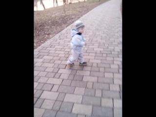 Белый пудель на прогулке