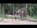 Приветливые панганские слоны