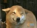 собачки-милашки