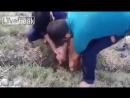 Спасение козленка провалившегося под землю на глубину около 2-х метров / Пакистан