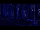 Nighttime Ambience with Fireflies 10 Hours Nature Sleep Sounds