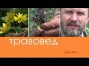 Травовед Герань Рассказывает Моряков Сергей Викторович