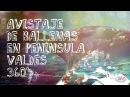 Península Valdés y la danza de la Ballena Franca en 360