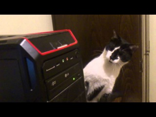 My cat gets confused by CD-ROM
