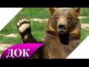 Правда о русских медведях. Документальный фильм