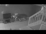 Смешное_видео_испуганных_котов_взорвало_