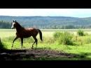 Лошади.Клип