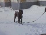 В Уфу вернулась зима, собаки в восторге.