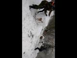 когда много снега)