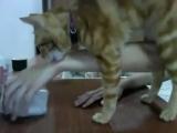 Кот просит хозяйку открыть коробочку ...