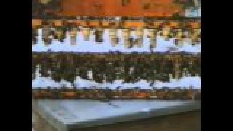 Копия видео Разведение пчел