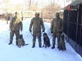 Мохнатый спецназ на страже порядка Харьковская Нацгвардия тренирует боевых соба
