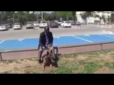 Мгновенная реакция собаки-телохранителя на атаку ножом