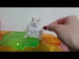 Hamster broke