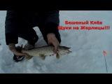 Бешеный Клёв - Зимняя Ловля Щуки на Жерлицы 2017 Щука на Жерлицу Видео