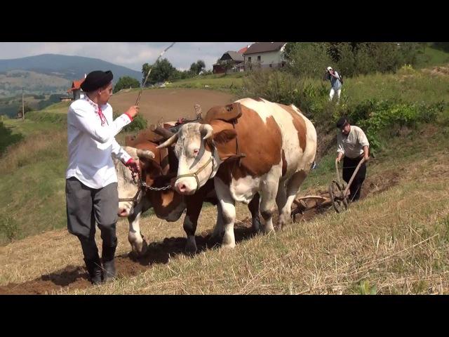 Фільм Газдованє на Гриновських лазах.. 2016(Словенско)
