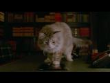 Смешной Кот, отрывок из фильма
