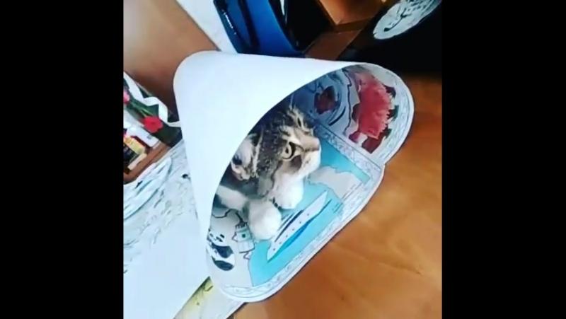 Апрелька мешает творчеству Фараон Мотая на кисть @lkasp киса кошка прикол ахаха кот смешно видео популярное творчество краси