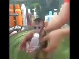 Купание обезьянки