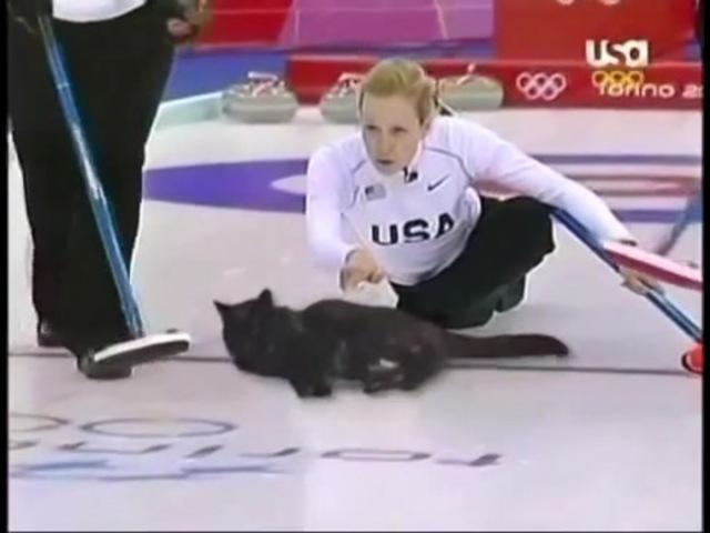 Cat Curling · coub, коуб